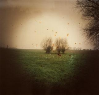 Dianne Bos, Pond Farm, (Bomb Pool), Wulvergem, Belgium, 2014