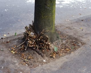 Jeff Wall, Clipped Branches, East Cordova St., Vancouver, 1999
